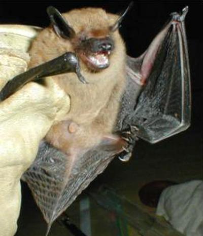 APC ALPINE PEST CONTROL Bat Removal