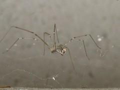 APC ALPINE PEST CONTROL Spider Removal