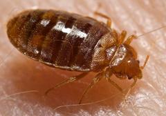 APC ALPINE PEST CONTROL Bed Bug Control